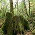 天文の森ヤクスギランド