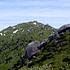 宮之浦岳登山