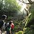 白谷雲水峡トレッキング